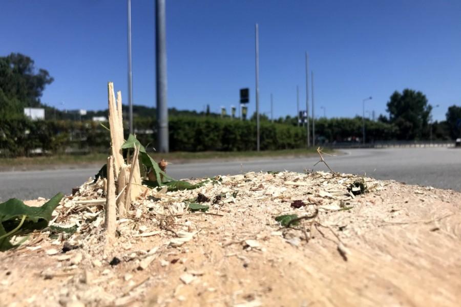 Destruição de árvores faz germinar um movimento de revolta