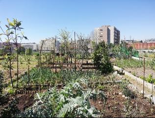 Hortas Urbanas assumem cada vez mais protagonismo nas nossas cidades