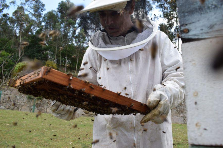 O apicultor escritor