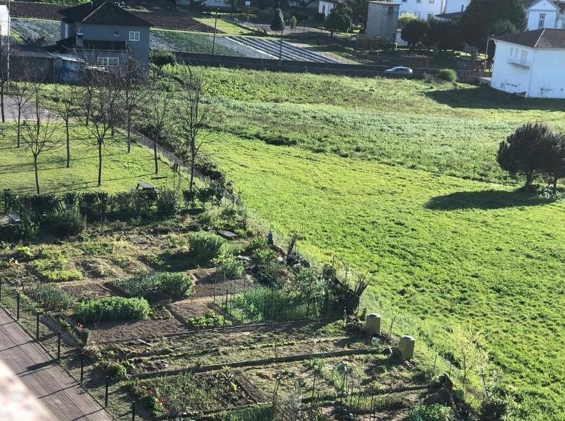 As hortas urbanas combatem os efeitos da pandemia