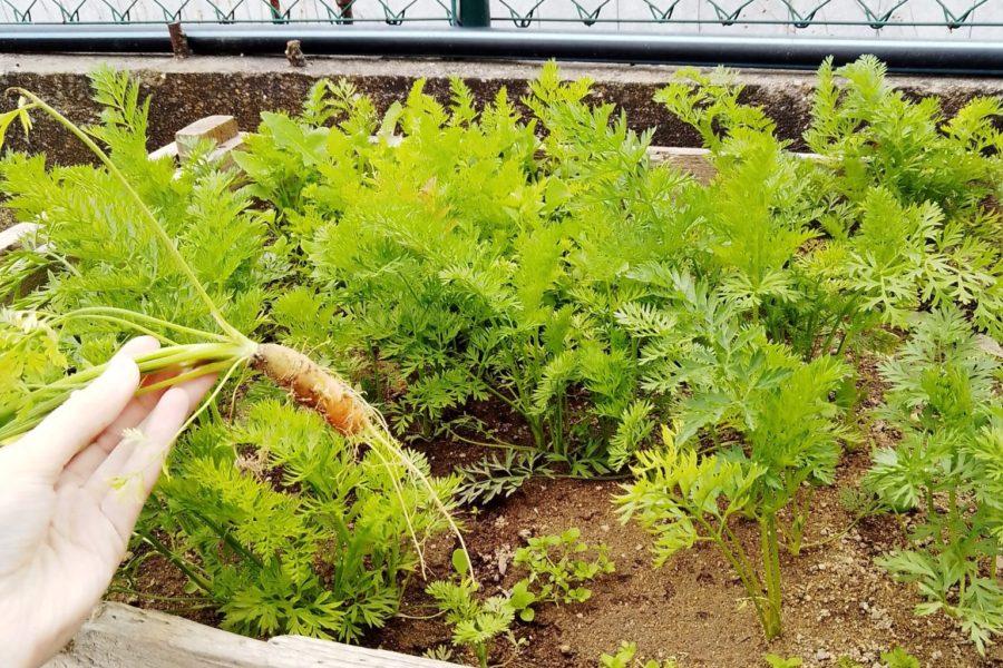 A minha horta é sustentável!