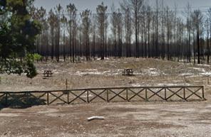 Recuperação da Área Florestal ardida, na Zona entre a Tocha e a Praia da Tocha