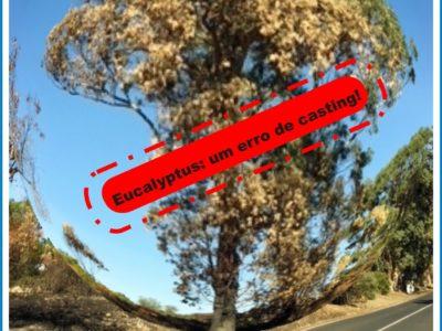 cartaz eucalipto